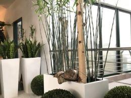 Bambus-im-weißen-Gefäß