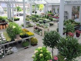 blumen_reimann_indoor_outdoor_08o