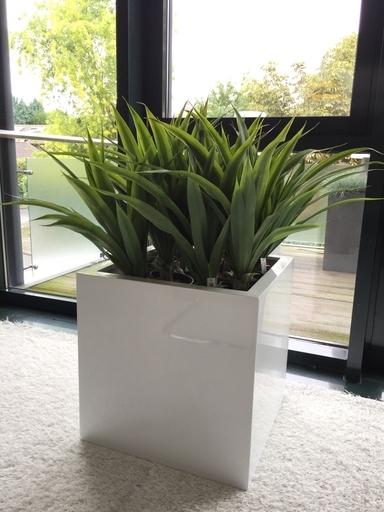 kunstpflanzen blumenhaus alfons reimann. Black Bedroom Furniture Sets. Home Design Ideas